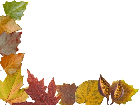 Autumn different and colorful leaves frame in white background photo