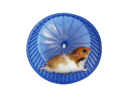 Hamster in a wheel over white background Stock Photo - 9491668