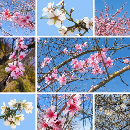 Different white and pink cherry tree spring flowers in a collage photo