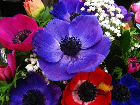 flower arrangements: Vibrant and colorful background of flowers