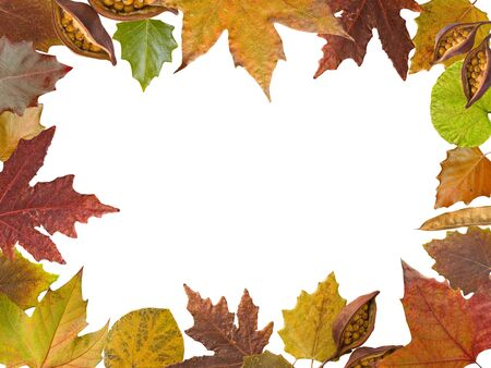 Autumn different and colorful leaves frame in white background Stock Photo - 9838772