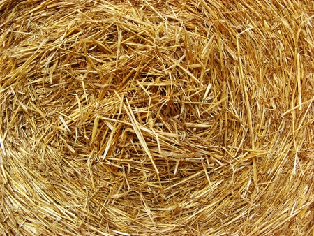 Golden straw texture background, close up photo