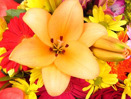 A closeup lily flower with different flowers background photo
