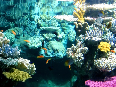 Colorful aquarium, showing different colorful fishes swimming Stock Photo - 10182322