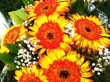 Vibrant and colorful background of flowers Stock Photo - 10260660