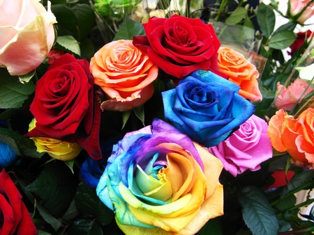 Variety of beautiful roses, red,pink ,blue and rainbow Stock Photo