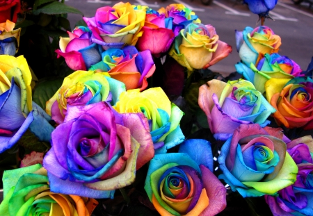 A unique and very special rainbow roses