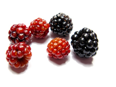 Black and red berries isolated in white