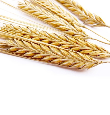 Wheat stalks isolated in white background Stock Photo - 10417023