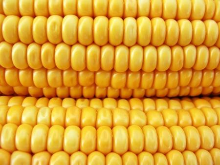Yellow and fresh corn close up