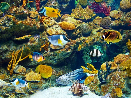 Colorful aquarium, showing different colorful fishes swimming Stock Photo - 10634362