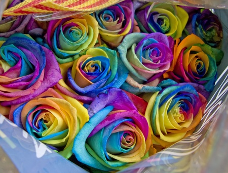 A unique and very special rainbow roses, isolated in white Stock Photo