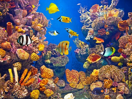 aquarium tank: Colorful aquarium, showing different colorful fishes swimming Stock Photo