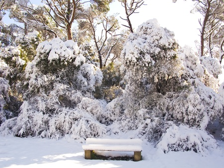 Snow covered forest with bench photo