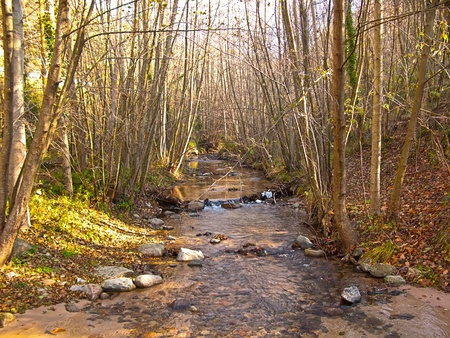 quiet scenery: River and little waterfall in the middle of leafy forest, cold and clean water with green trees leaves