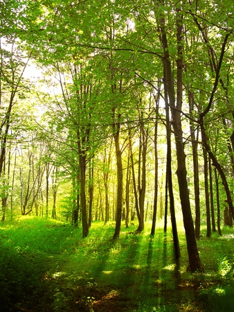 Magic sun rays among forest trees and silhouettes Stock Photo