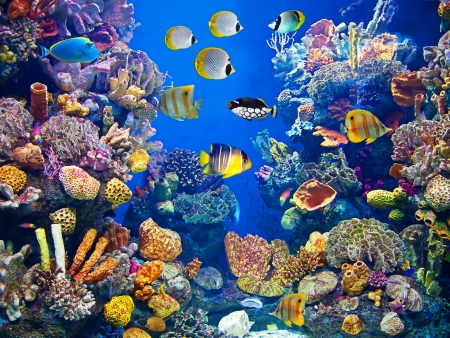 Colorful aquarium, showing different colorful fishes swimming photo