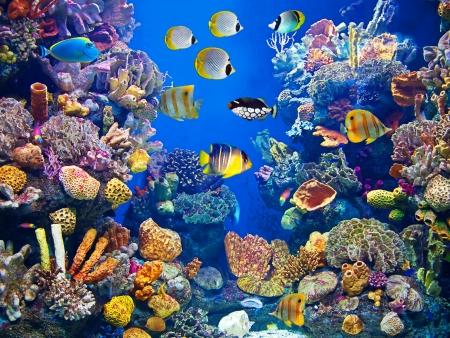 arrecife: Colorido del acuario, que muestra diferentes peces de colores nadando