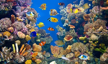 species: Colorful aquarium, showing different colorful fishes swimming Stock Photo