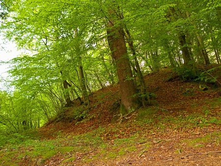 density: Green and wild nature, forest in Catalonia(Spain). Green tree at spring contrasting with brown leaves in ground