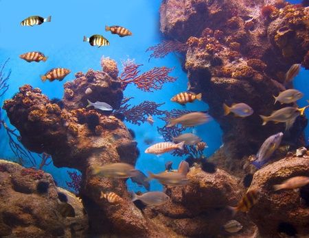 Colorful aquarium, showing different colorful fishes swimming Stock Photo - 11969783