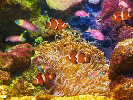 shoal: Colorful aquarium, showing different colorful fishes swimming Stock Photo