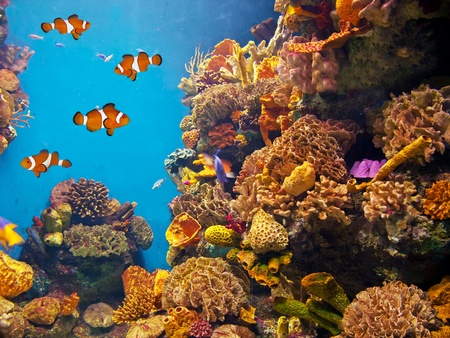 Colorful aquarium, showing different colorful fishes swimming Stock Photo - 11969765