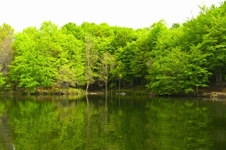 Green forest reflection on water. A lake in Catalonia (Spain) Stock Photo