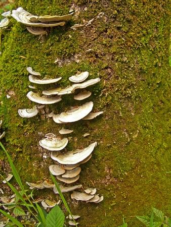 Mushrooms on a tree trunk Stock Photo - 12004565