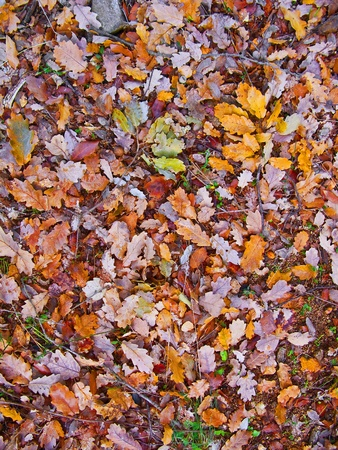 Colorful and vivid autumn leaves in different colors (yellow, red, purple, pink...) photo