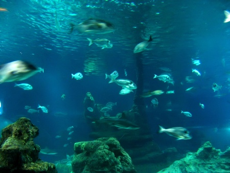 Underwater aquatic life with fishes Stock Photo - 12373403