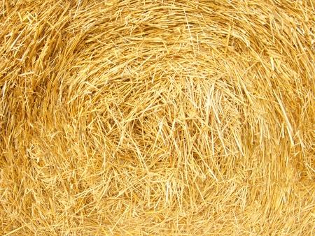 rick: Golden straw texture background, close up