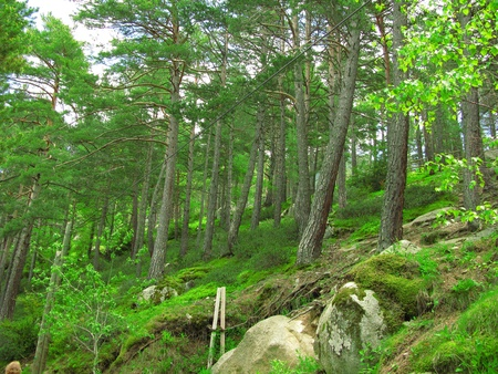 Green and wild nature, forest in Andorra  Europe   Trees and grass detail
