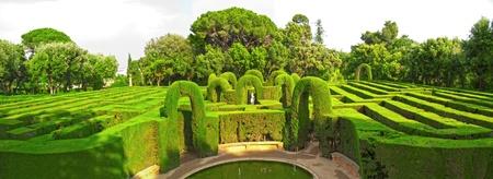 English green labyrinth Panoramic extra large photo
