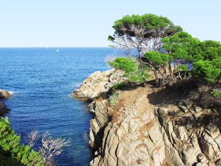 costa brava: A beautiful corner in Costa Brava Spain , transparent water between trees and pines  Stock Photo
