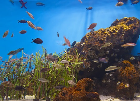 Colorful aquarium, showing different colorful fishes swimming Stock Photo - 13134383