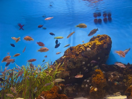 Colorful aquarium, showing different colorful fishes swimming Stock Photo - 13134496