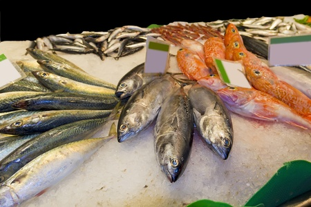 Variety of fresh fish in the market: tuna, codfish, monkfish, goosefish Stock Photo - 13549593