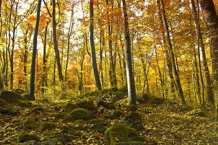 arboles secos: Bosque de otoño Paisaje Road Park con el bosque de otoño