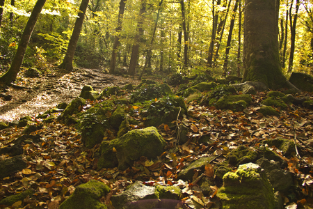 western europe: Autumn Forest. Park Road. Landscape with the autumn forest. Stock Photo