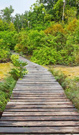boardwalk in forest tourist attraction, Thailand Stock Photo