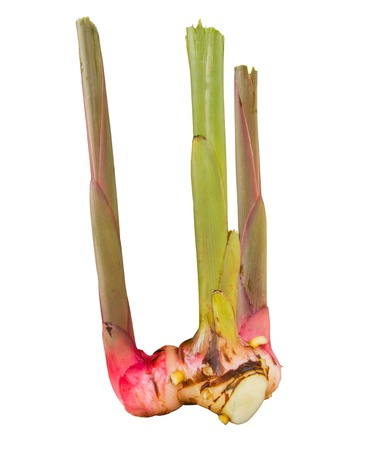 Galangal isolate on white background