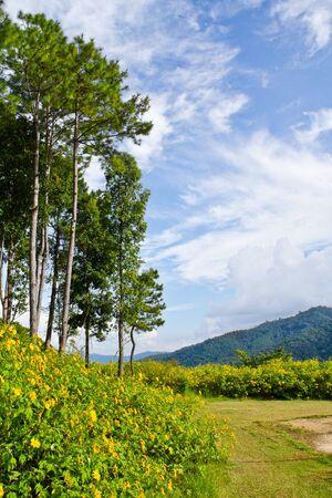Landscape view on mountain,northern region of Thailand
