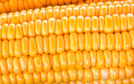 Close up raw corn