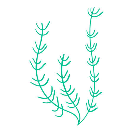 Seaweed isolated on a white background