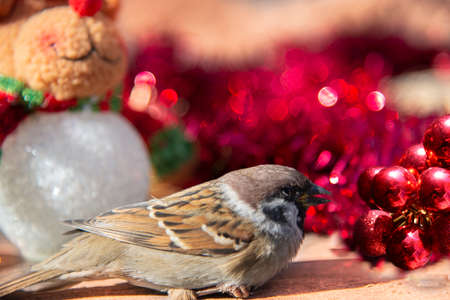 Little Sparrow among Christmas decorations Stock Photo