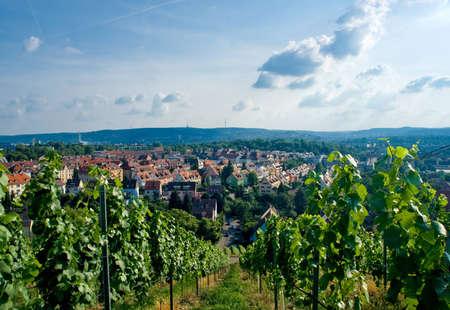 stuttgart: Vineyard and residential district in Stuttgart city center, Baden Wuertemberg, Germany.