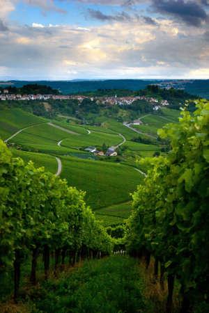 stuttgart: Vineyard in the fall of Stuttgart, Germany