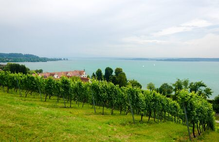 canada agriculture: Vineyard on the lake Constance