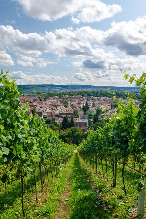 stuttgart: Agriculture vineyard landscape in the South of Germany - Stuttgart